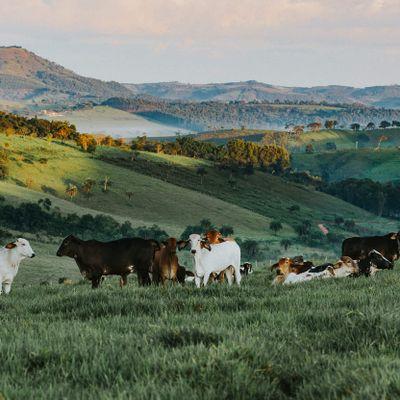 Qual é o panorama do mercado de pecuária pós covid-19?